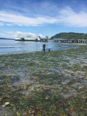 Vashon Ferry from Endolyne Low Tide