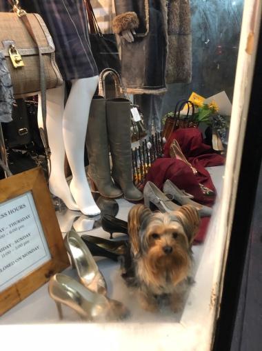 Window Dressing at Zelda Zonk