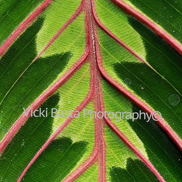 Green Leaf with Pink Veins Logo Med