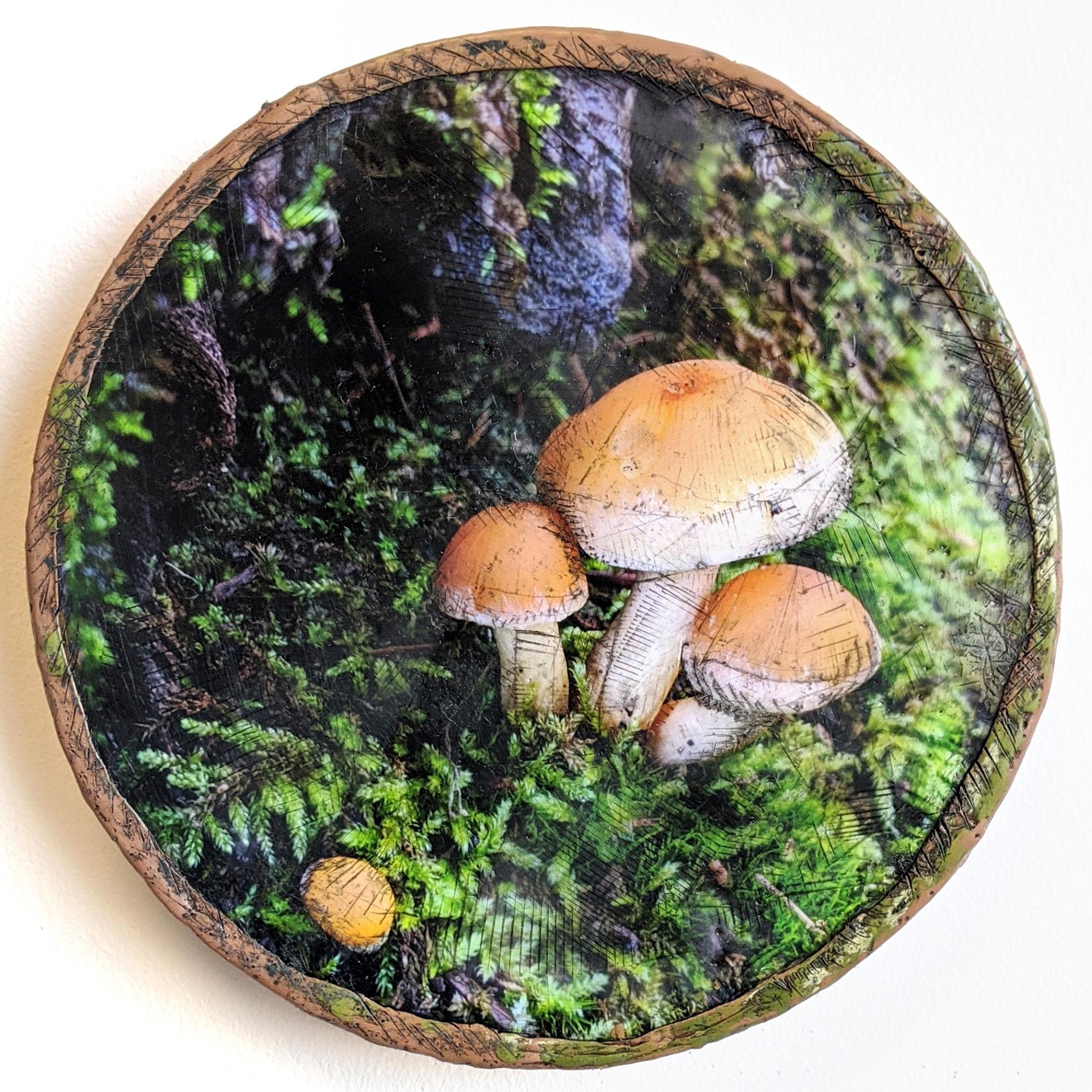 mushroom_lowrez_taramcdermott