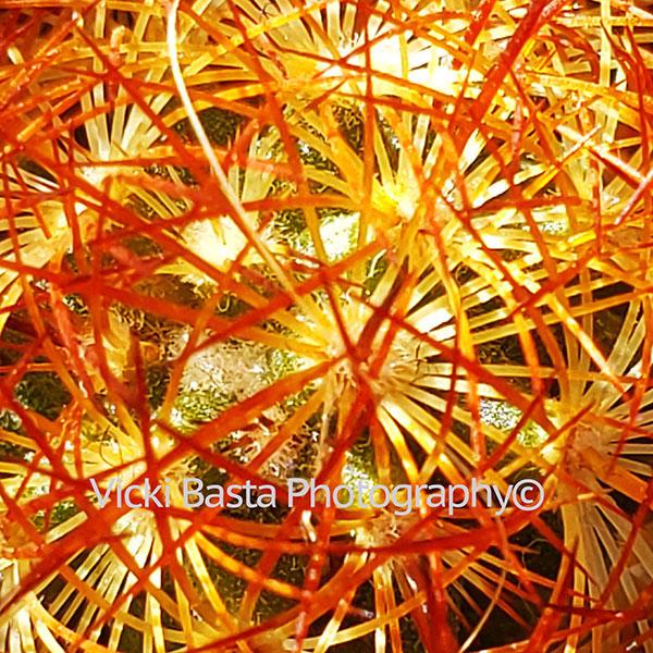 Orange Circular Cactus VPK Logo Medjpg